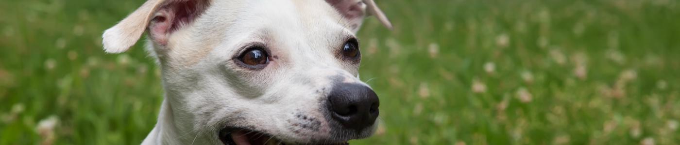 Dangerous dogs & animal welfare